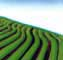 Cross Slope Farming