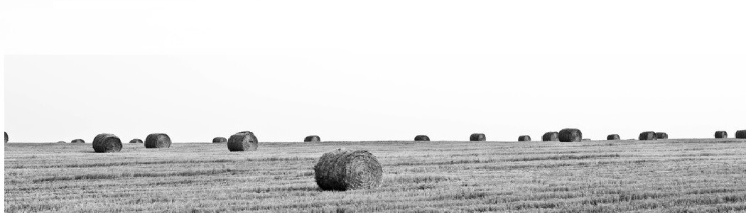 Penn State University to Survey Chesapeake Bay Farmers