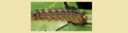 GM caterpillar pic