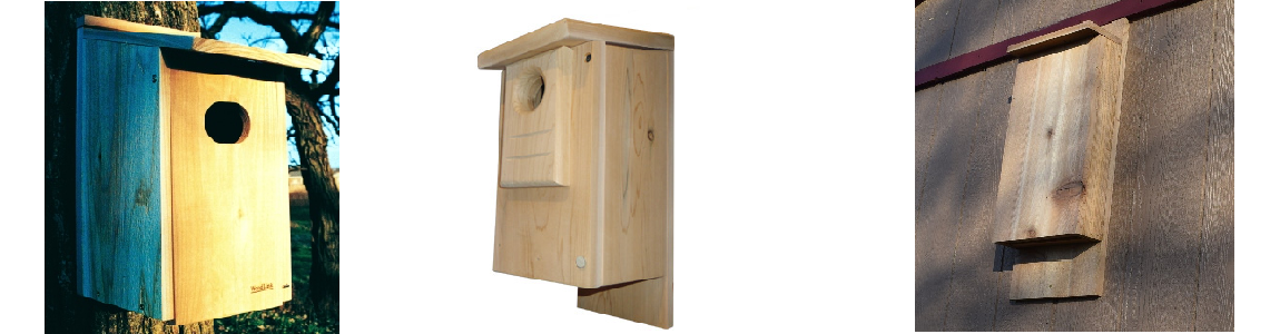 Order Your Wildlife Boxes Now and Have Them for Earth Day!